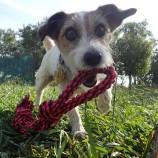 Jakie karmy premium stosować dla psa